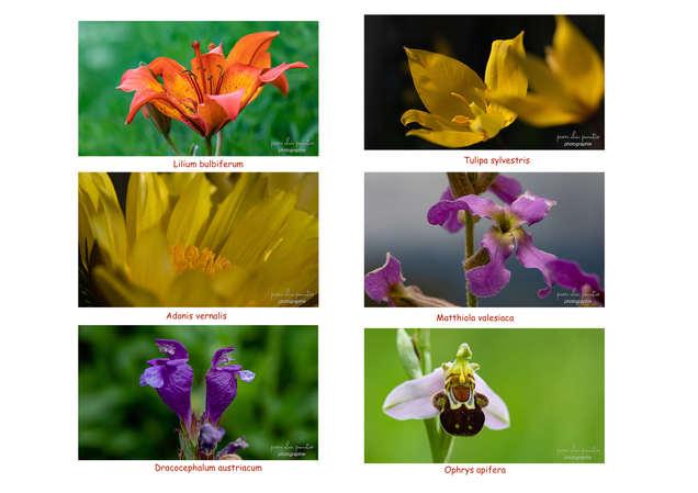 flore rare.jpg