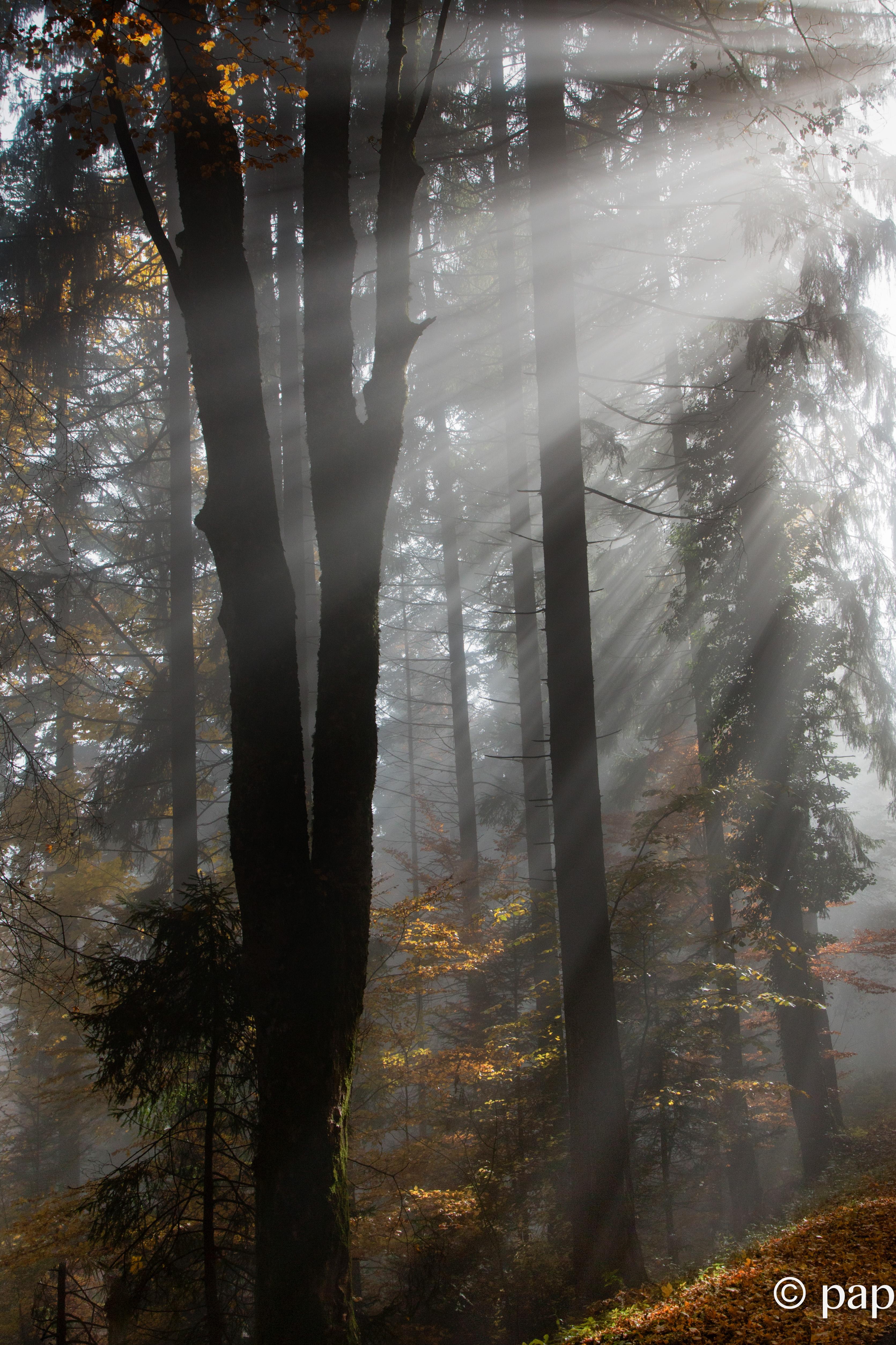 entre brume et soleil