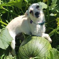 Guppy & Melon