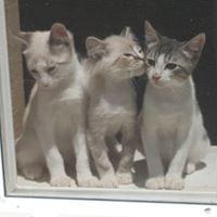 Tres Kittens