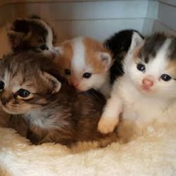 Spring 2017 kittens