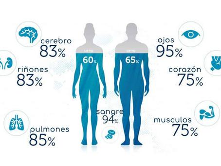 ¿Qué porcentaje de agua hay en el cuerpo humano?