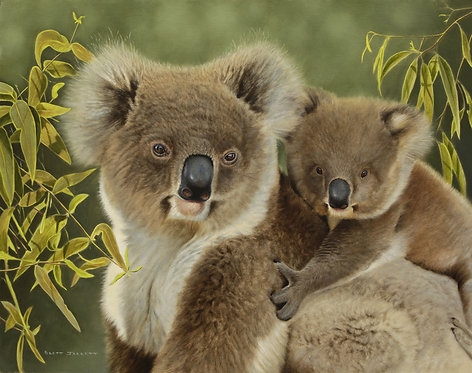 Koala Mum and Joey