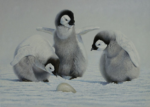 'Childhood' Emperor Penguin Chicks
