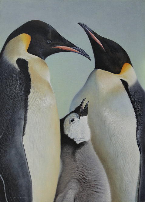 'Antarctic Family' Emperor Penguins