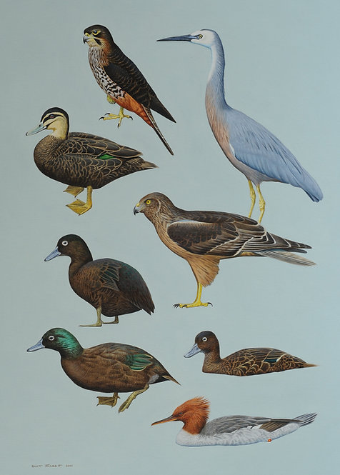 Complete Guide to Antarctic Wildlife NZ birds I