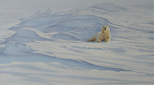 'Spring Warmth' Polar Bear