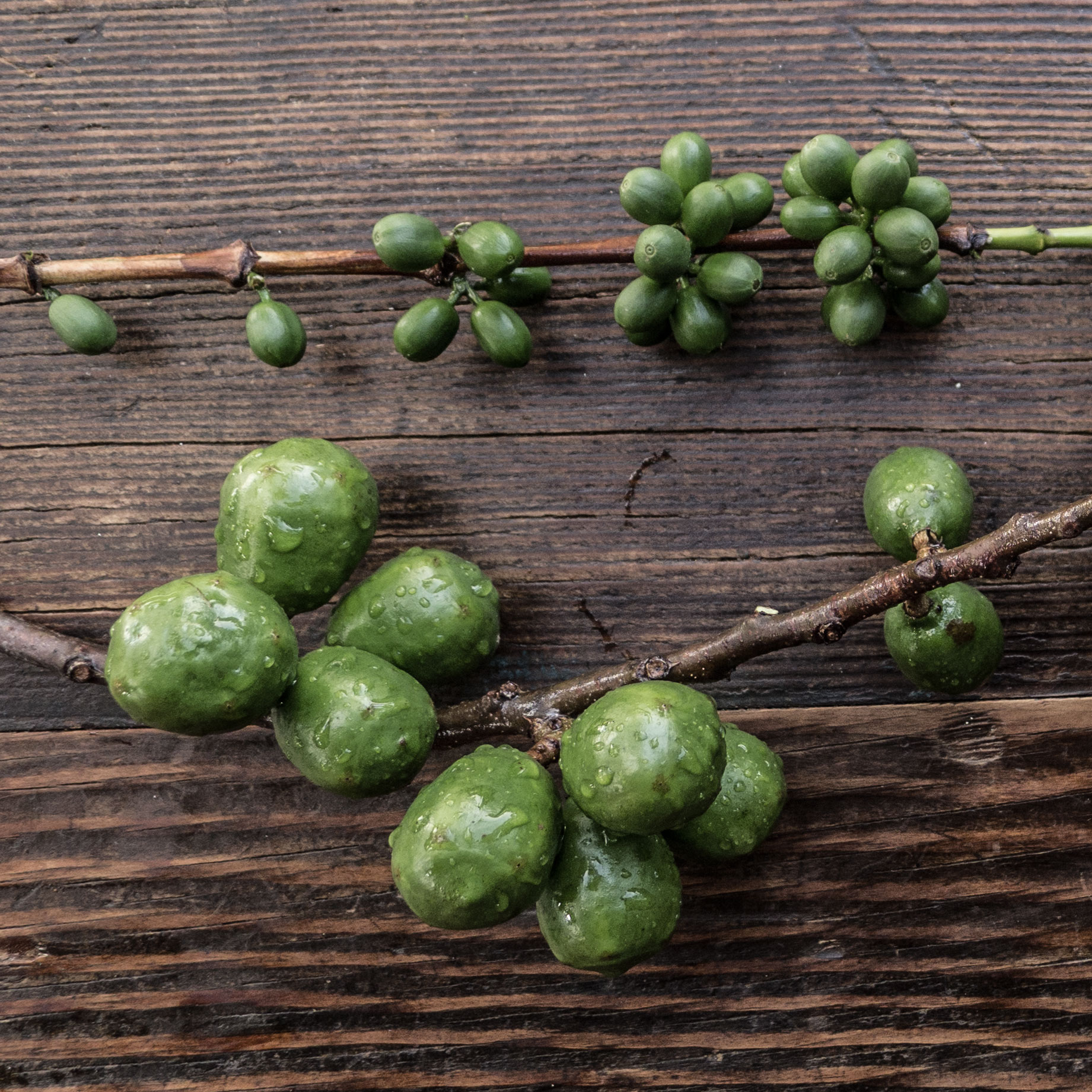 above: coffee beans, below: jocotes