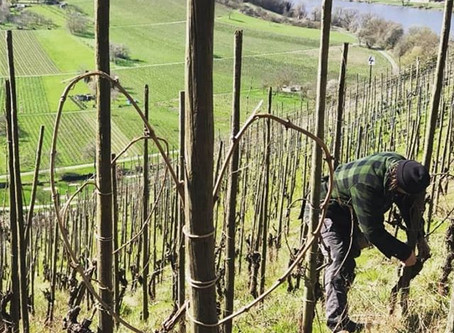 Die erste Wein-Solawi an der Mosel wird in der Krise gegründet!