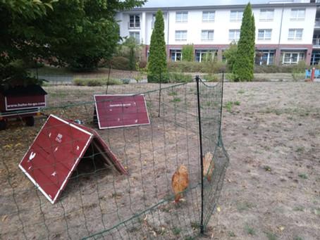 Hühner im Altersheim?!