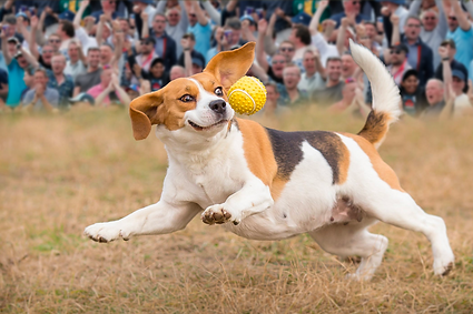 Battersea_DogShow.png