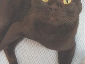 猫免疫不全ウィルス感染症(猫エイズ:FIV)