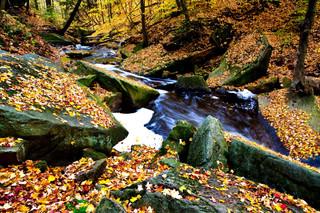 Grindstone Creek Niagara Escarpment Onta