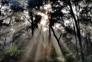 Morning Mist,Starkey Wilderness, Florida