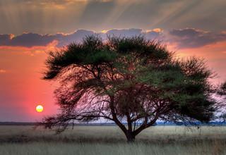 Sunset, Kalahari Nat Park, Botswana_resi
