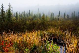 Morning Fog over bog, Algonquin Pk, Cana