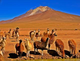 Volcano Ollague and LLamas, Bolivia_resi