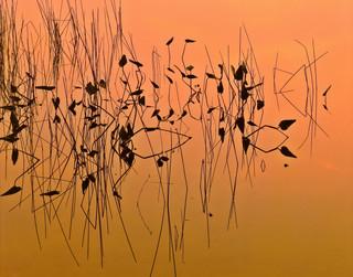 Reeds At Dusk_resize.jpg