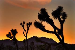 Sunset Yoshua Tree Nat Park_resize.jpg