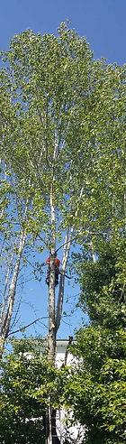 Tree Surgeon Nuneaton, Tree Surgeon Bedworth, Nuneaton Tree Surgeons
