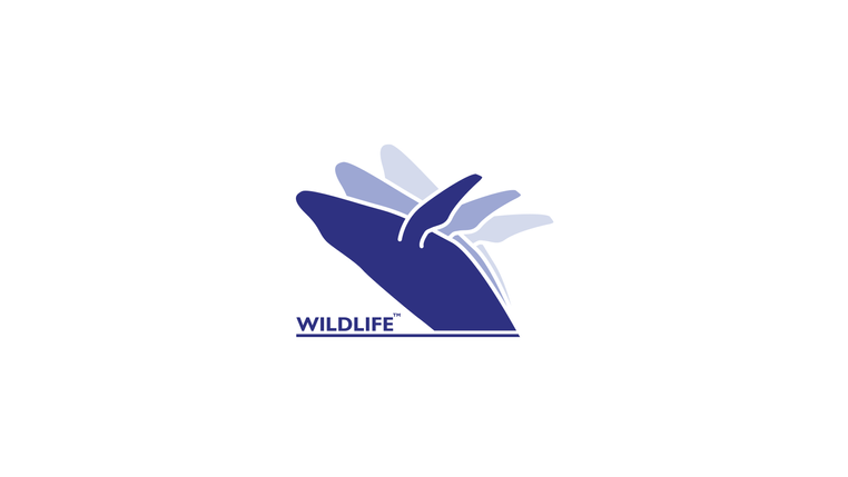 wildlife whale fished-01.png