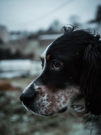 chien_neige-2.jpg