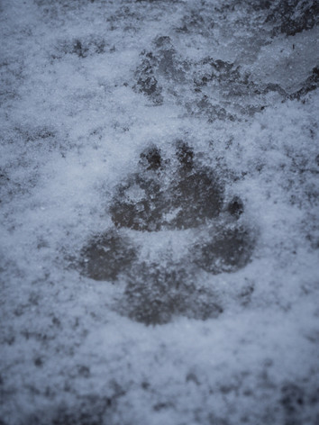 chien_neige-4.jpg