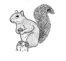 Squirrel ANL 1108