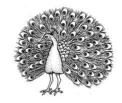 Peacock BIR5040