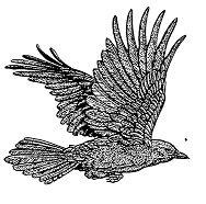 Flying Crow BIR5033