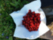 AlpineStrawberries.jpg