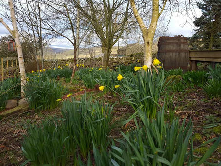 Spring Has Sprung At Crackpot Cottage