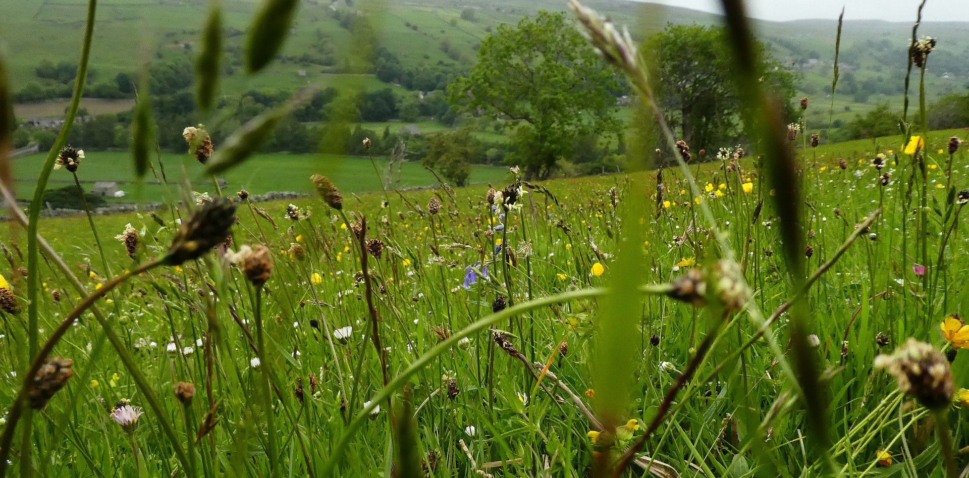 Meadows in Gunnerside