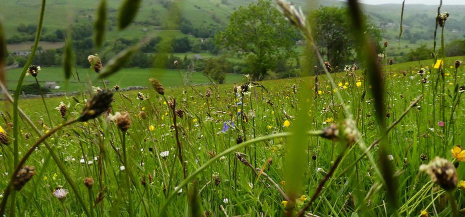 Meadows in Gunnerside