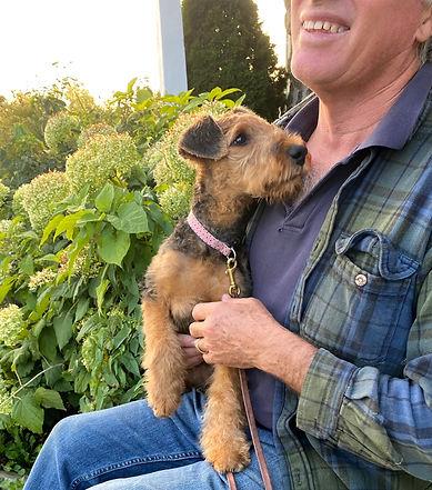 Violette septembre 2020 Airedale Terrier