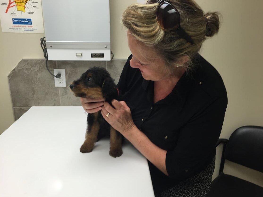 Céline chez le vétérinaire