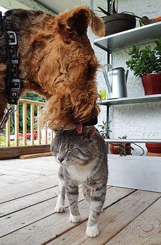 Bonnie et son chat Airedale Terrier la M