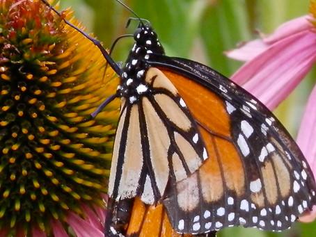 Help Make Greater Longfellow a Certified Community Wildlife Habitat
