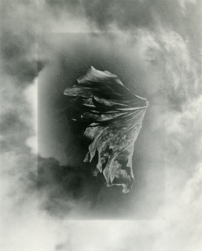Dried Leaf in Clouds