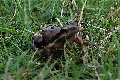 a frog.jpg