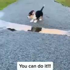 You can do it!.png