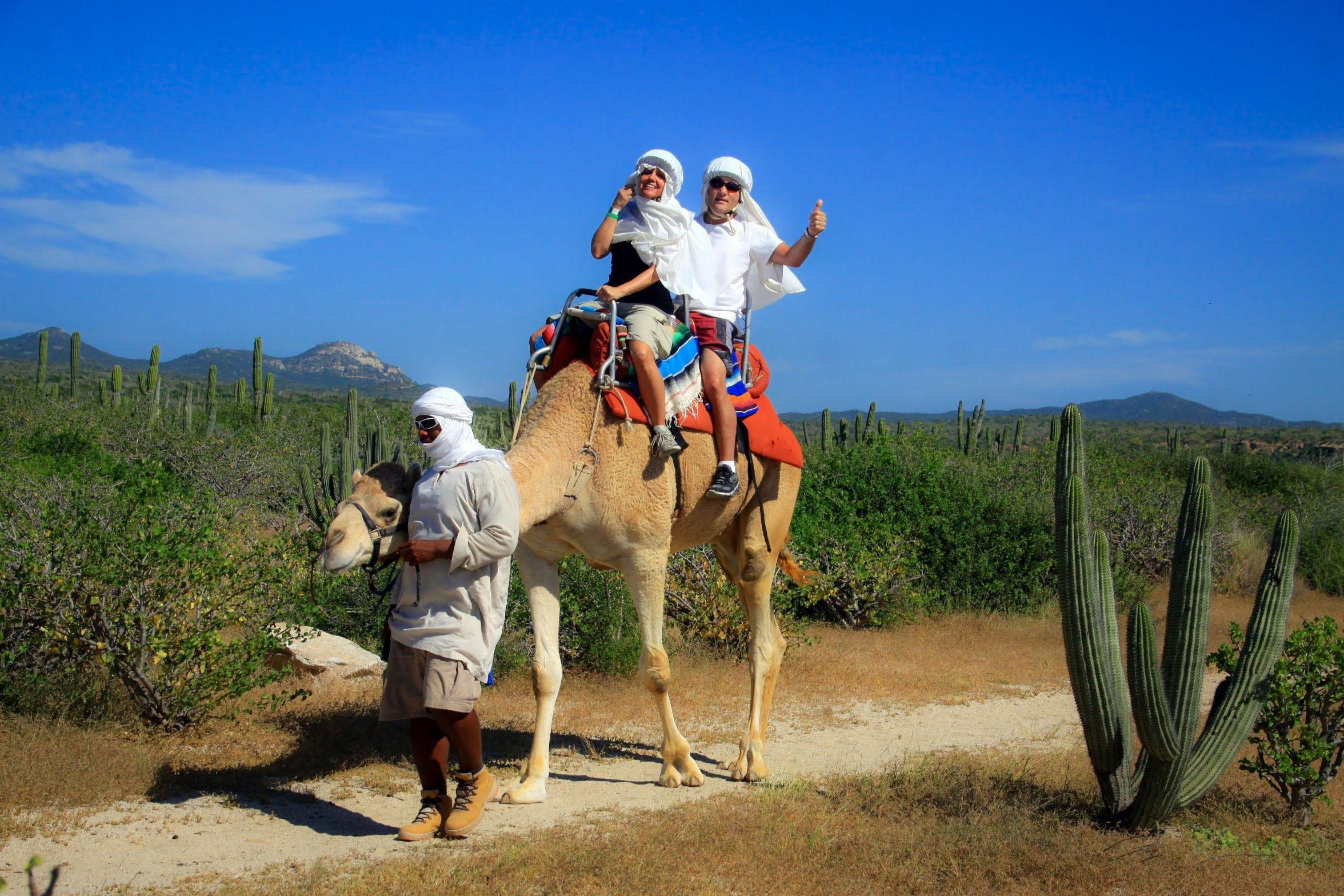 paseo en camello los cabos