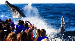 avistamiento de ballenas los cabos