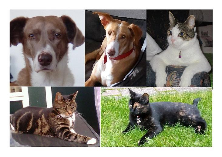 Nieuwe achtergrond huisdierenpraat 2.jpg