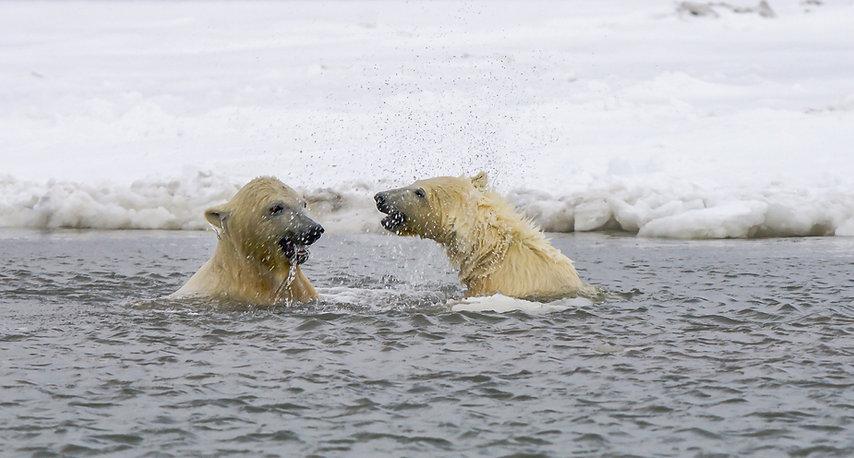 P.E.T.A.L_Polar_Bear_GiveBack