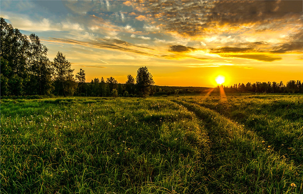 Sunset rural farm meadow horizon view.jp