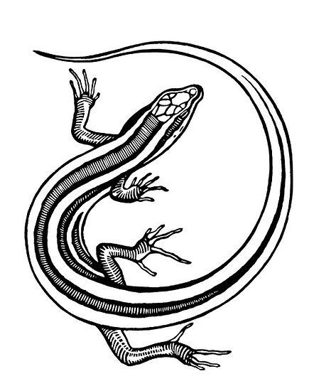 whiptail thumb.jpg