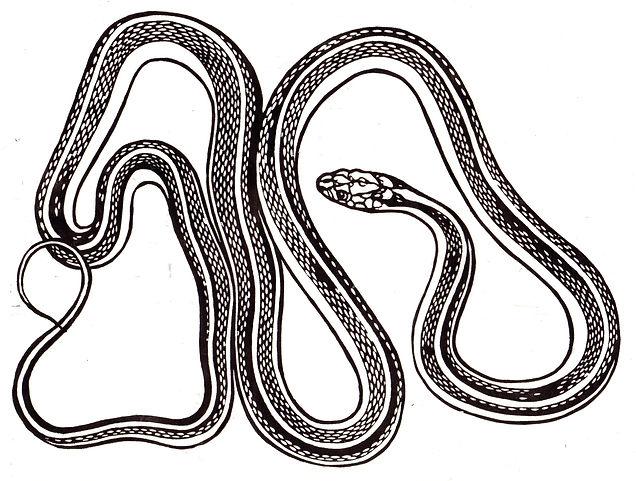 gartersnake011.jpg