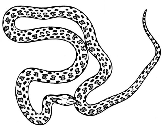 Night Snake thumb.jpg
