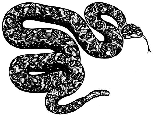 rattlesnake thumb copy.jpg